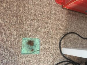 Carpet patch before