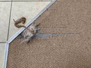 Carpet transition damage before