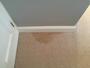 Carpet stain before