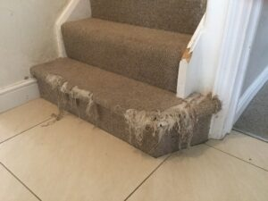 Stair carpet before